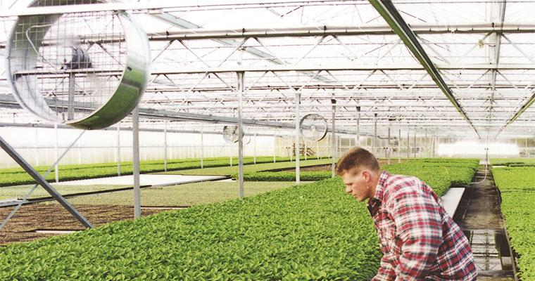 Smallaire Stirring Fans in Greenhouse